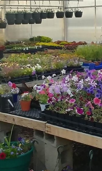 It's Almost Time for the WHS Annual Spring Plant Sale!