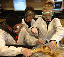 three students working with cadavers in a science lab