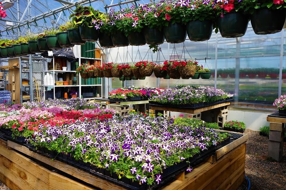 WHS Greenhouse